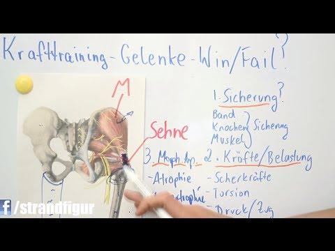 Krafttraining & Bodybuilding! Die Beste Lösung für gesunde Gelenke ZurStrandfigur.com