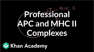Professional antigen presenting cells (APC) and MHC II complexes | NCLEX-RN | Khan Academy