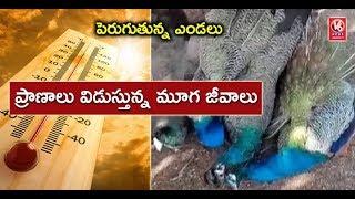 Summer Effect | 5 Peacocks Died Due To Sun Stroke In Rajanna Sircilla District