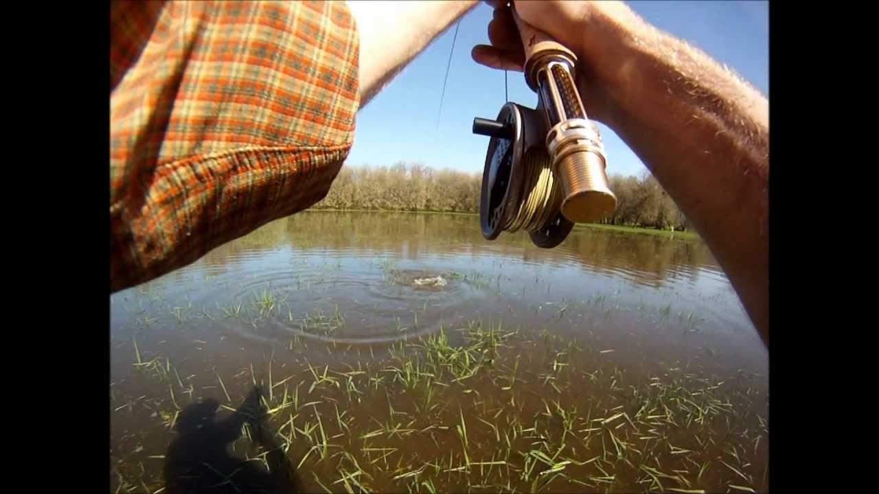 Carp flats fly fishing near portland oregon youtube for Fishing in portland oregon
