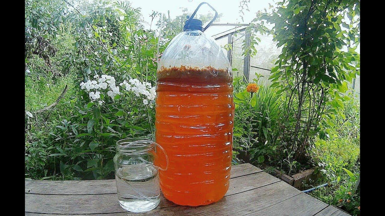 Сделать яблочное вино в домашних условиях 303