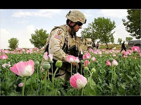 War On Drugs + War On Terror = Boom Times For Opium Trade