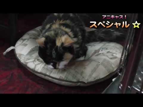 20年生きた猫の現実の姿を教えたい