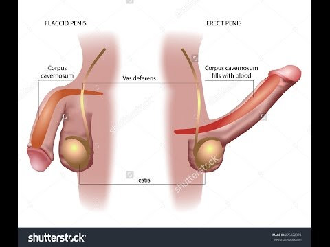 sex stellung kleiner penis