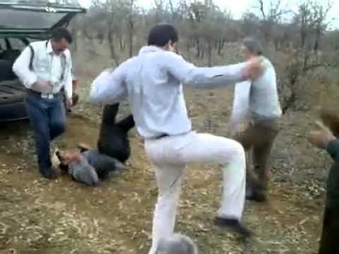 Bailes - Papi chulo baile de borrachos