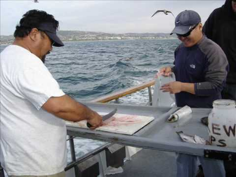 Dana point fishing passeio de barco youtube for Dana point fish report