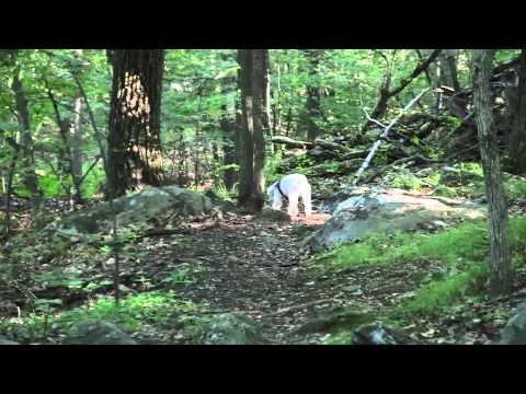 Baci hiking Turkey Mountain 4 months post radiation