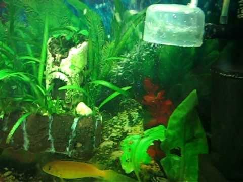 Как сделать в аквариуме co2