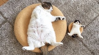 Super HILARIOUS & CUTE ANIMALS - Get ready to LAUGH YOUR HEAD OFF