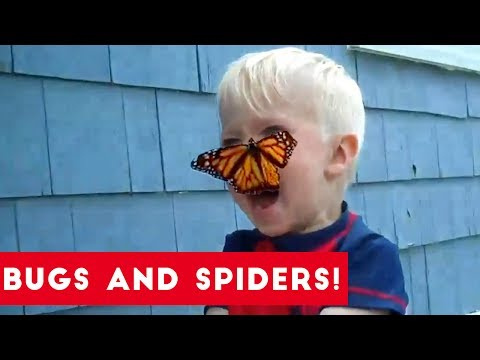 Funniest Insects and Spiders of 2017 | Funny Pet Videos
