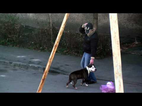 Бойцовая собака+Пьянь-Хозяин=Беда...