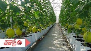 Ứng dụng công nghệ Nhật Bản phát triển nông nghiệp | VTC