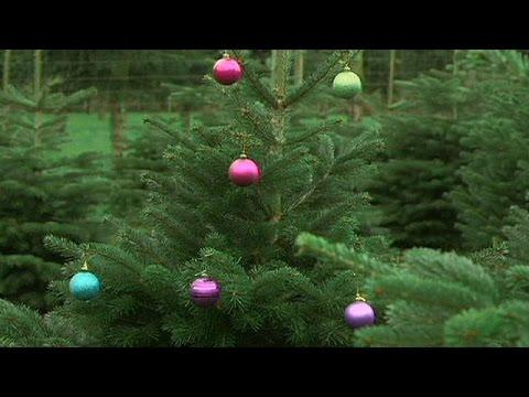 شجرة الميلاد…رمز الإحتفال بعيد ميلاد المسيح