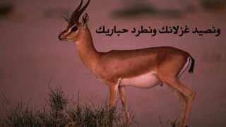 مفارقات في الغربة-SudaneseOnline