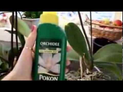 Como eu cuido das minhas Orquídeas!