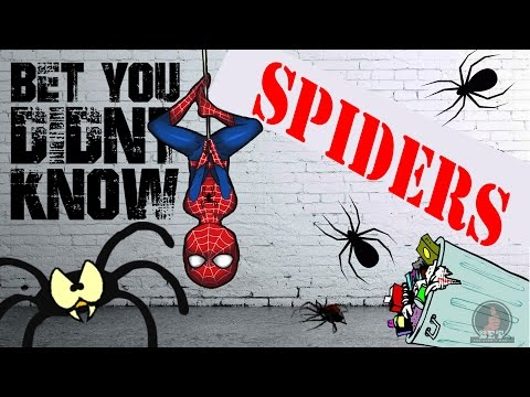 Amazing Spider Facts | Incredible Facts about Spiders