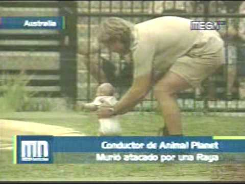 Muerte Del Cazador De Cocodrilos [Steve Irwin] Video
