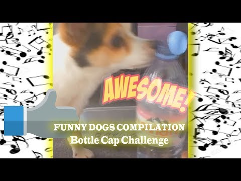 BEST COMPILATION: Dogs Bottle Cap Challenge
