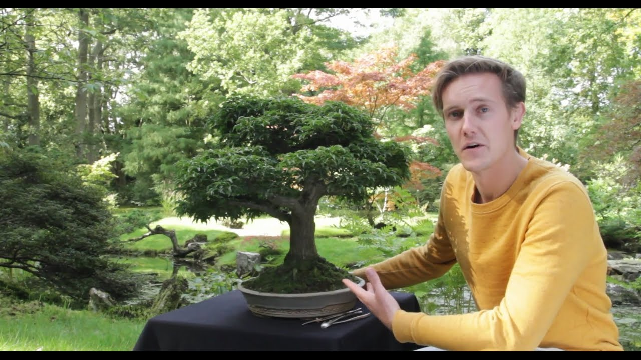 Bonsai trees for sale youtube for Small garden trees for sale