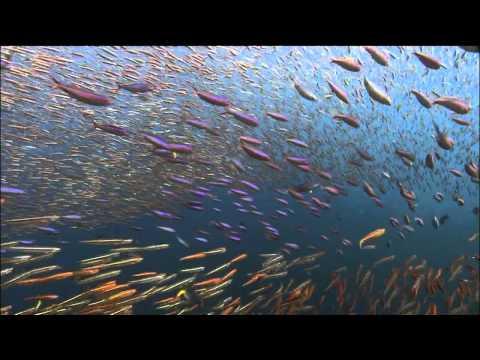 Ocean Odyssey 2010 720p part 6 (HD)