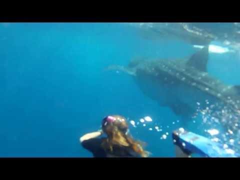 Isabela Behrens com Tubarão Baleia  - Cancun / Mexico