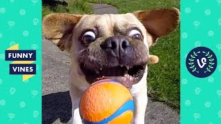 TRY NOT TO LAUGH - FUNNY ANIMALS Compilation   Dogs & Cats   Funny Vines June 2018