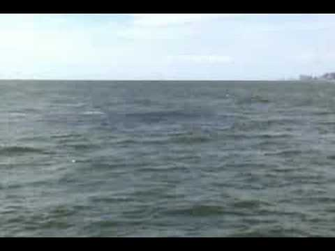 Anglins Fishing Pier 2007 Fall Fishing Fort Lauderdale Florida