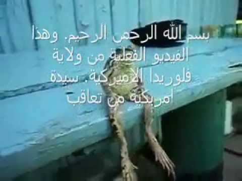 Allah Azab Woman Punished For Burning Quran Becomes Frog video