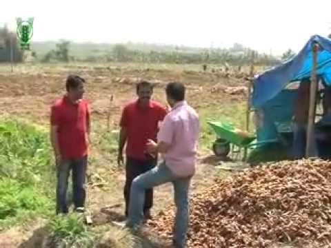 PRATHIBHA TURMERIC: A SUCCESS STORY - Hindi.flv