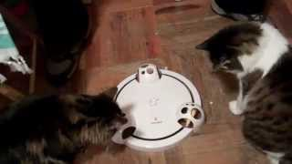 FroliCat POUNCE Rotating Cat Teaser / Toy