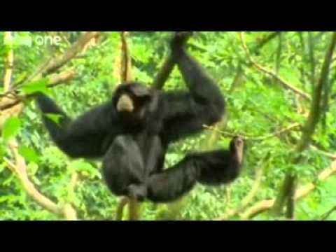 BEST OF Funny Talking Animals - Walk on the Wild Side