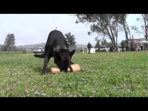 Schutzhund San Diego