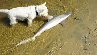 Dog  vs Fish  fight  2018