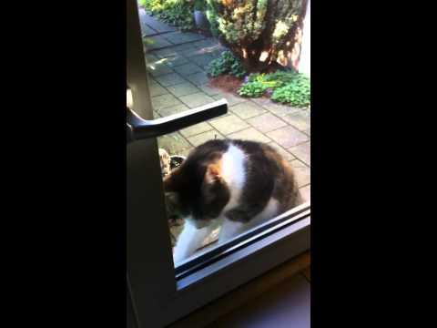 Our cat: 'Let me In Please'