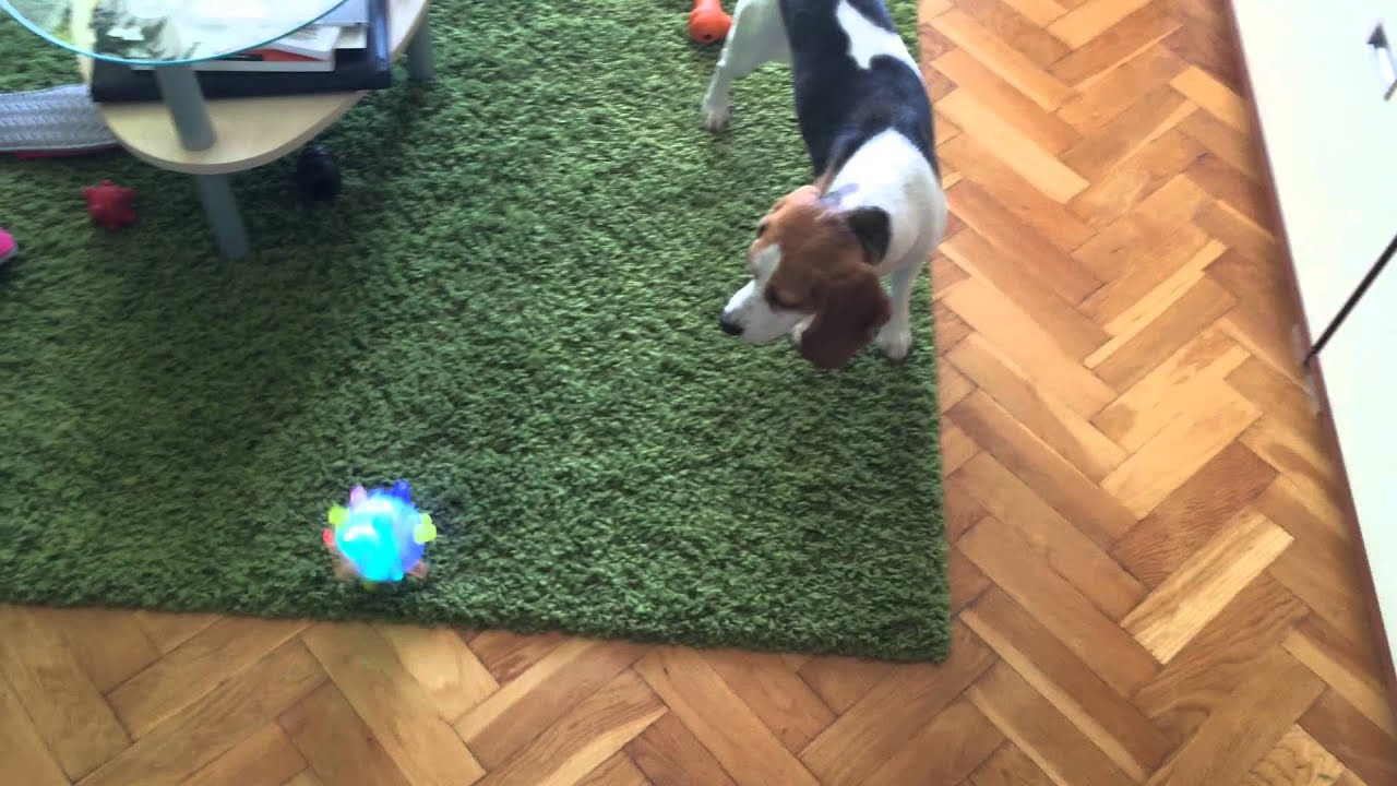 centrifugal bumble-puppy how to play