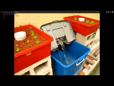 A beginner's Guide to building a Home Aquaponic System on a Low Budget