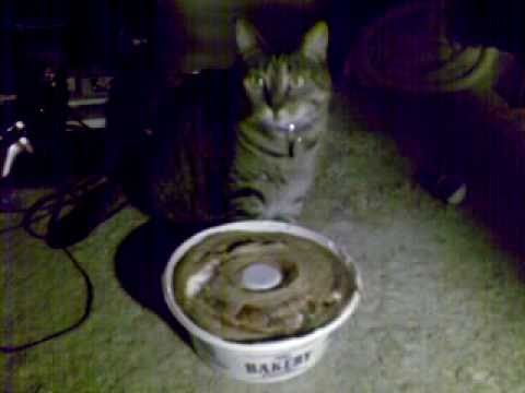 Cats Angel Food Cake Loves His Angel-food Cake