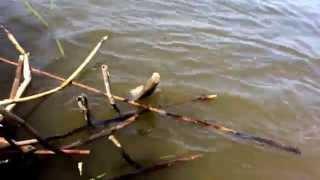 рыбалка в бандурово