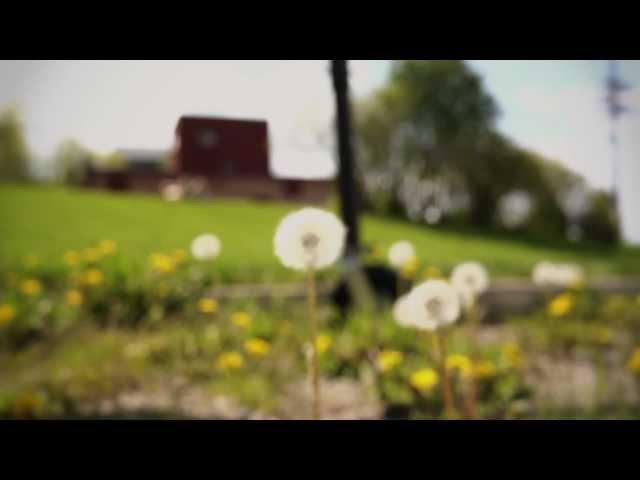 Three Ways To Eat Dandelion Flowers