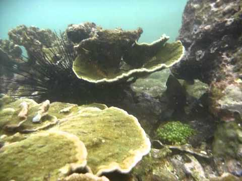 Sri Lanka,ශ්රී ලංකා,Ceylon,Coral Reef,urchin,Seeigel,oursin (11)