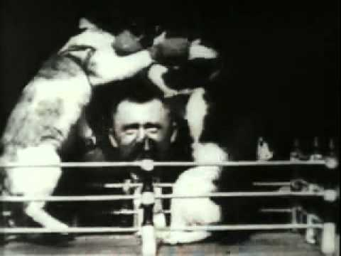 Professor weltons boxing cats 1894