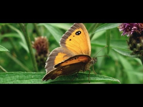 Surviving Climate Change - Butterflies Head North