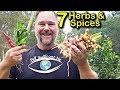 Lagu 7 Easy to Grow Asian Herbs & Spices for the Organic Backyard Garden