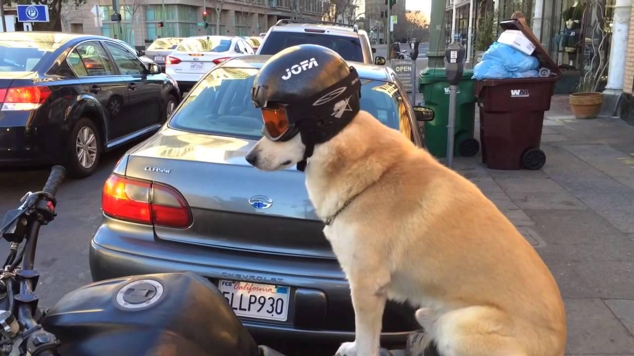 Best Motorcycle In Watch Dogs