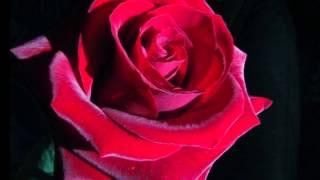 Watch La Autoridad De La Sierra Momentos Inolvidables video