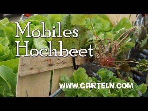 Einkaufswagen Hochbeet Mini Hochbeet Garteln