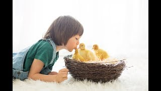 Salmonella Outbreaks Blamed On Pet Chickens