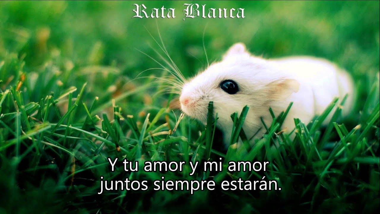 letra de rata blanca: