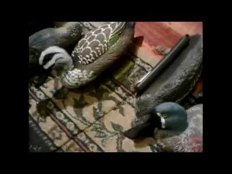 DUCK HUNTING VICTORIA 2011 ( PART 1)