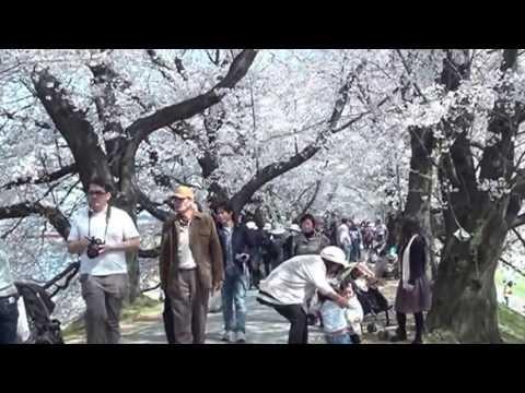 日本三大八幡の一角・石清水八幡宮本社が国宝に指定される、社殿・社宝通じて初の指定のキャプチャー